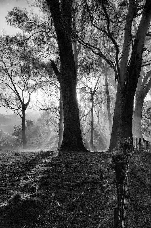 8 - Misty Mornings