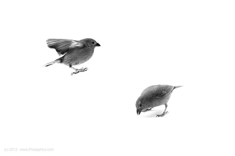 Bird, Bird
