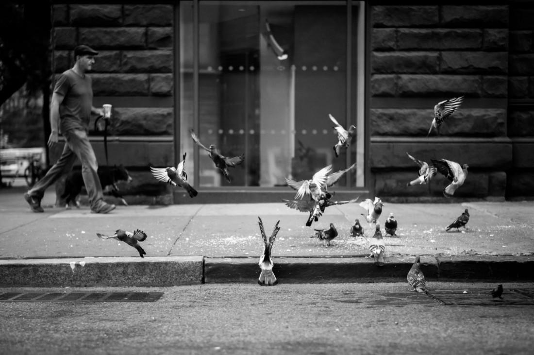 AG18-pigeons NY