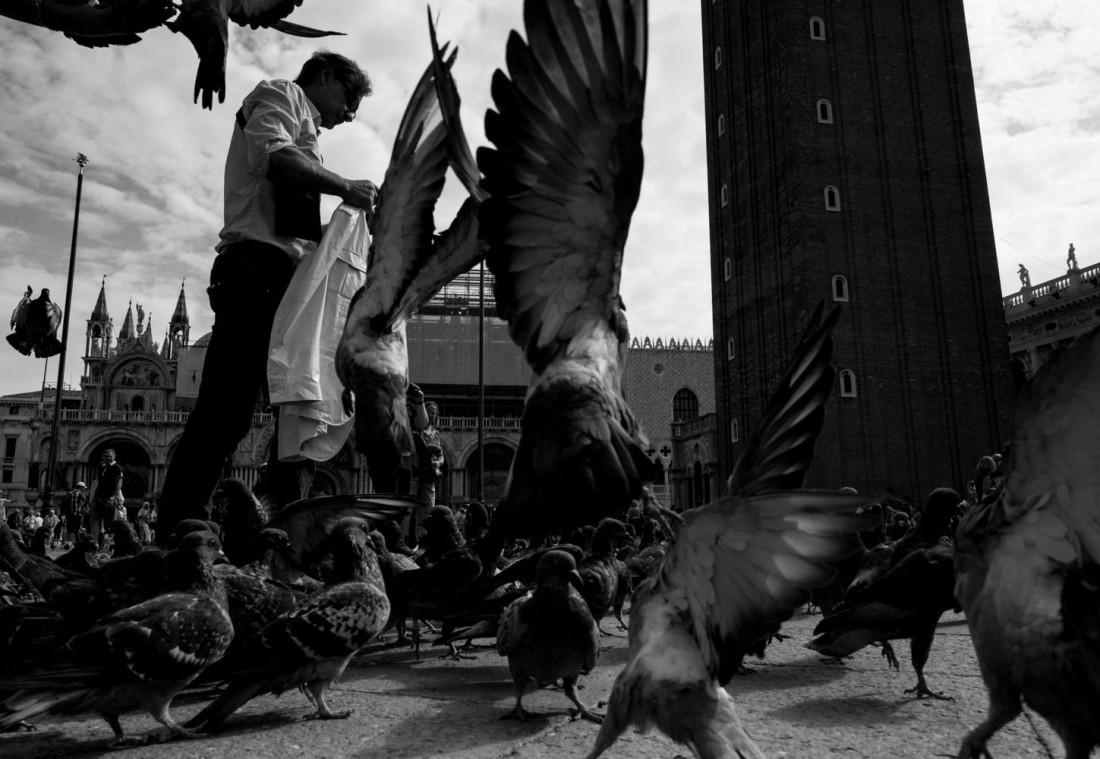 AG4-pigeons
