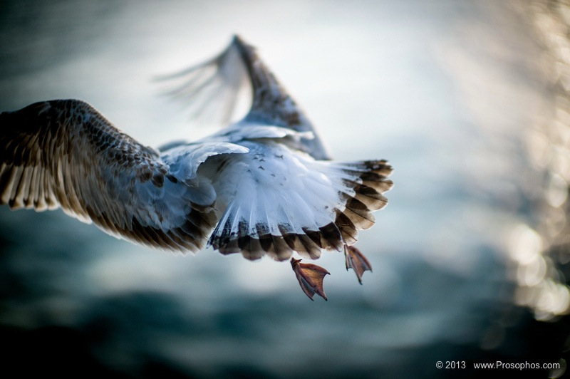 free-as-a-bird