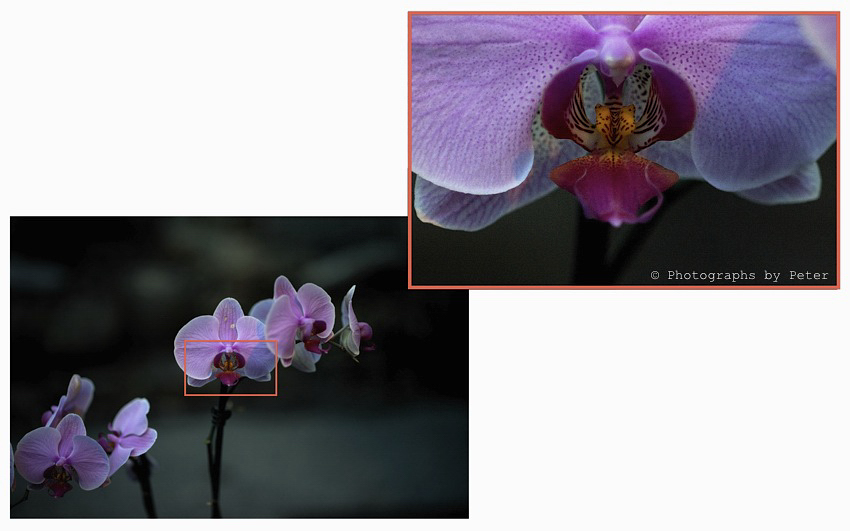 test-shot-2-orchids