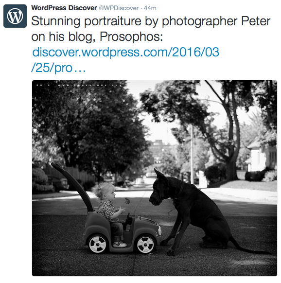 Thank you WordPress (Prosophos - Editor's Pick)
