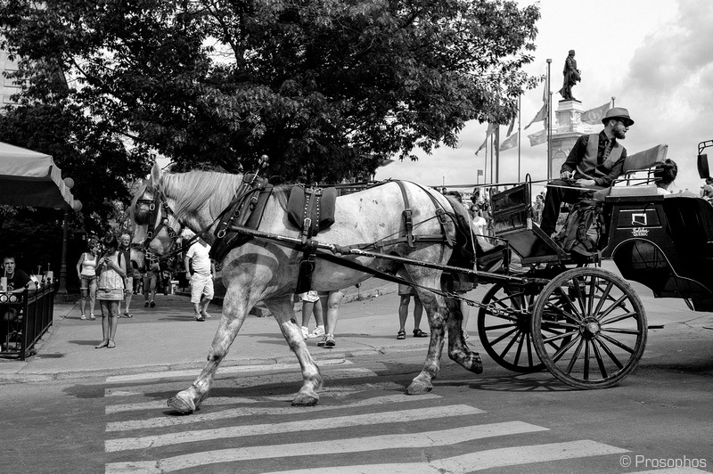 Horse and Carriage (Quebec City)