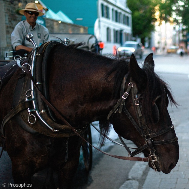 Horseman (Quebec City)