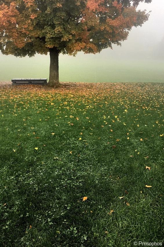 autumn-2016