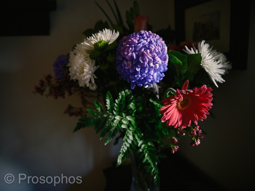 Mother's Day - Prosophos - Fuji Fujifilm GFX 100S - GF 32-64mm f4
