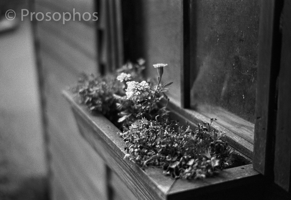 """Momentos of a Gloomy Day at Home, 1"" - Prosophos - Leica M3 - Voigtlander 50mm Nokton 1.5 II - Kodak Tri-X 400"
